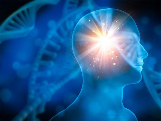 Shen energy in the brain